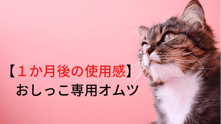 【1か月使ってみて】猫のおしっこ専用オムツ。。。「失敗」もありの「本音」を。