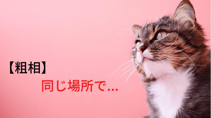 「えっ!またそこで?」同じ場所で粗相してしまうオムツ猫